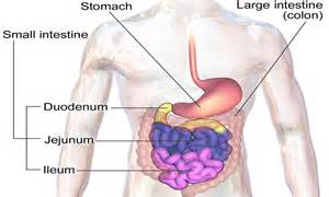 blocked colon symptoms picture 9