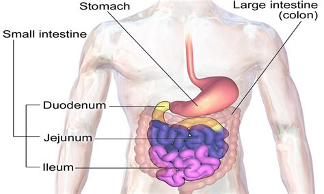 what are the symptoms of intestinal picture 3
