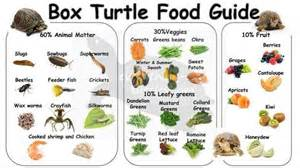 box turtles diet picture 14