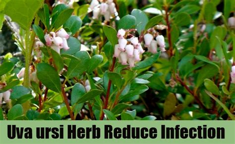 herbs that kill ecoli picture 10