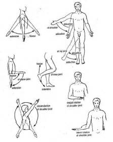 joint movements anatomy picture 1
