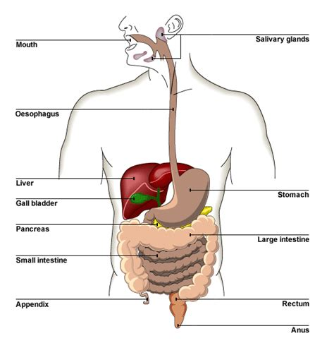 function of human gall bladder picture 9