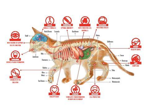 feline bladder disorders picture 15