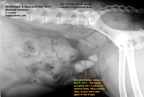 Canine prostate problems picture 7