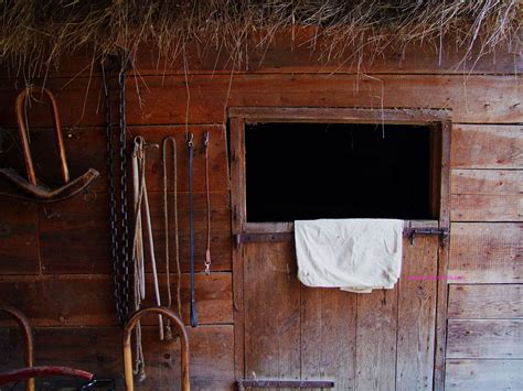 business opportunity and horse stable picture 10
