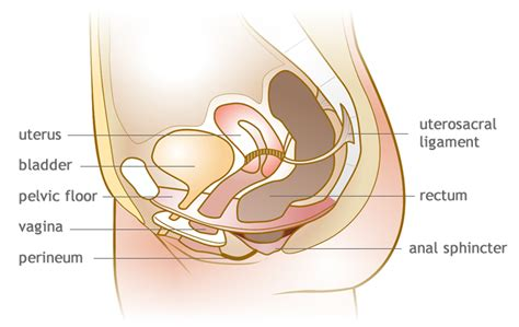 diagram of bladder prolapse picture 5