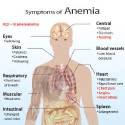 how does hypothyroidism cause anemia picture 3