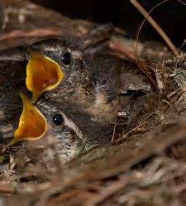 baby bird diet picture 9