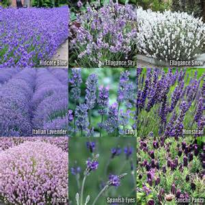 what herbs un your ateries picture 4