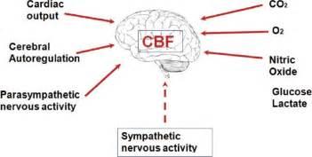cerebral blood flow picture 1