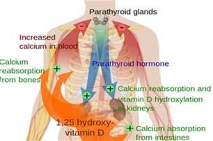 hypo parathyroidism picture 1