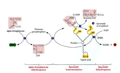 alpha lipoic acid picture 3