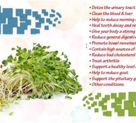 homeopathic alfalfa-health benefits picture 7