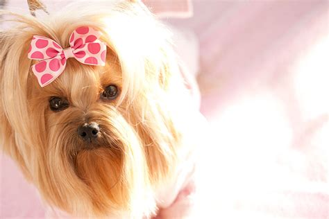 canine probiotics picture 2