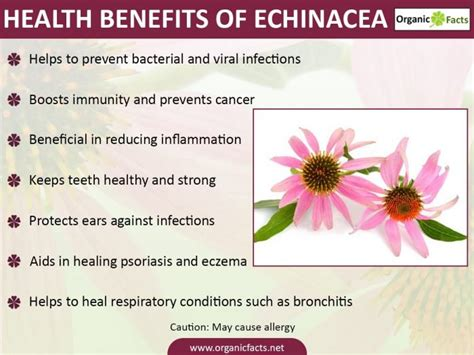 benefits of echinacea picture 5