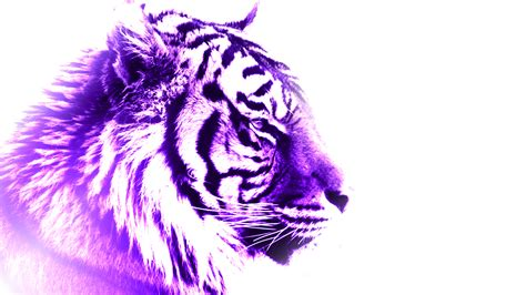where can you buy purple tiger pills picture 3