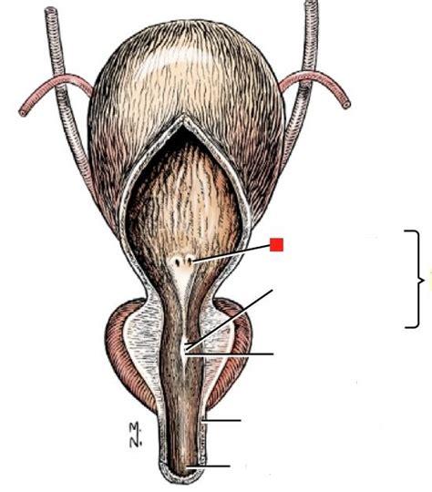 alice barrett bladder control picture 17