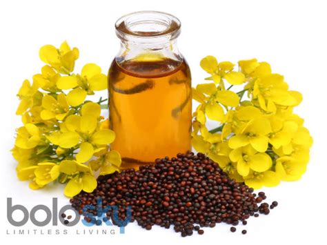 mustard seed oil for erections picture 2