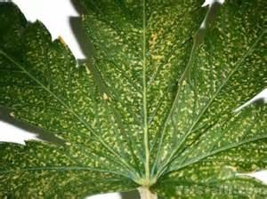 calcium spot h picture 18