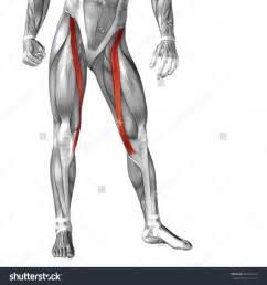 anatomy gall bladder picture 15