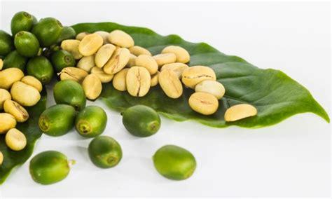 green coffee bean apotek picture 17