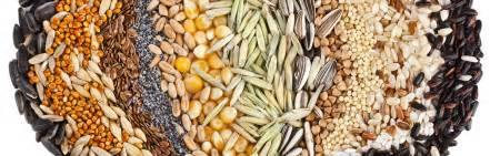 niger seeds for weight loss picture 13