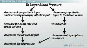 Does ginsing cause blood pressure to go up picture 9