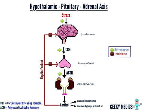 adrenal fatigue and low thyroid picture 7