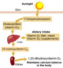 what nutrients does the liver need to metabolize picture 3