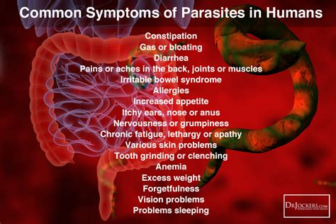 symptoms of intestinal parasites picture 3