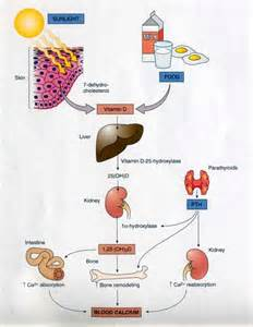 endocrinology donald bouma picture 3