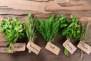 herbs and food to make elastin for face picture 15