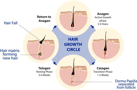 causes of body hair loss picture 13