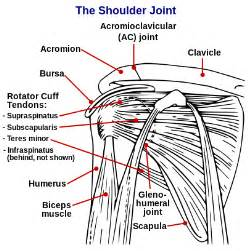 shoulder joint pain picture 14