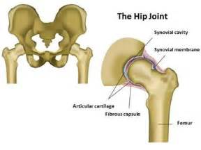 hip & joint picture 14