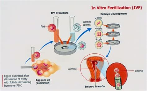fertipill or any highly recommended fertility pill picture 12