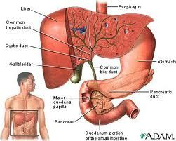 excess gas after gall bladder surgery picture 4