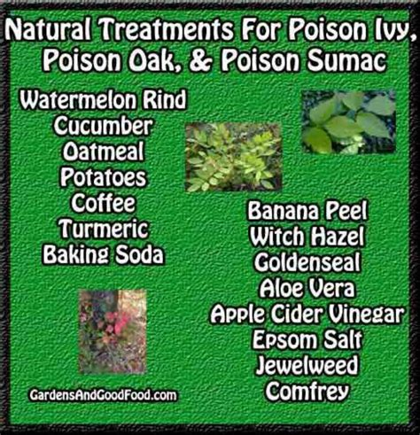 herbal cures for poison oak picture 1
