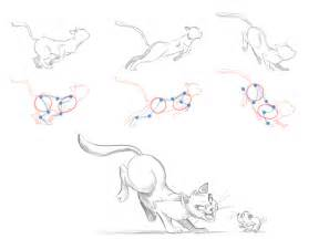 muscle actions of cats picture 15