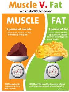 does muscle weigh more than fat picture 3