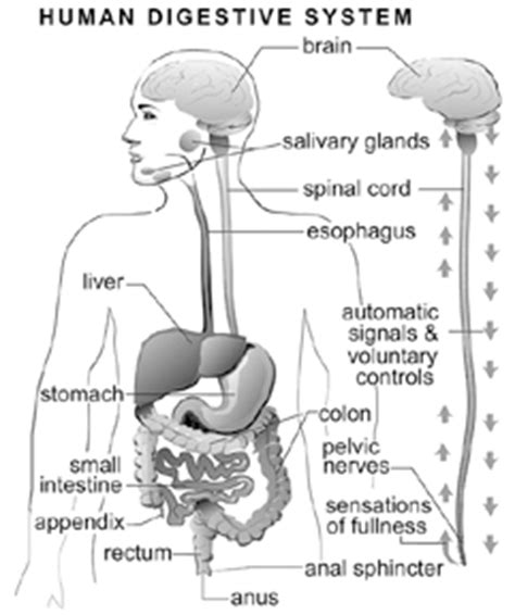 digestion stopped picture 17