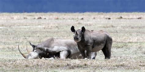 wild rhino pills picture 19