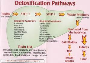liver detox and metabolism picture 2