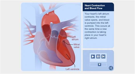 free blood flow animations picture 13