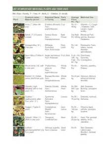 medicinal plants in the philippines and their uses picture 2