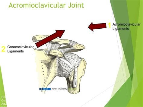 acromio-clavicular joint picture 6