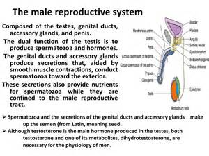 total testosterone for males picture 14