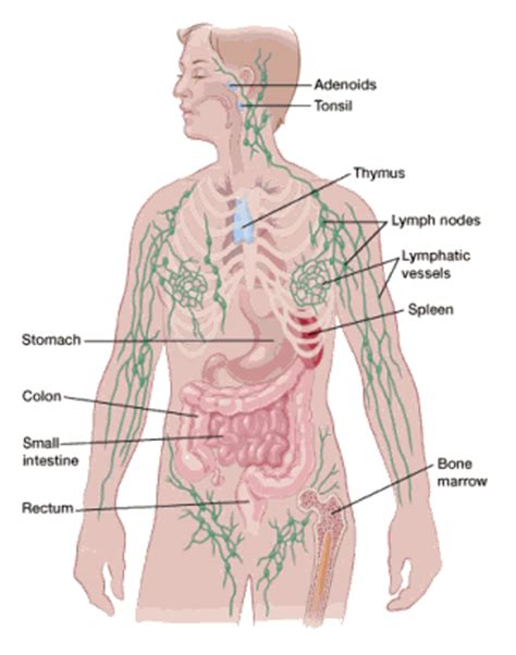 an enlarged spleen and having prostate cancer mean picture 11