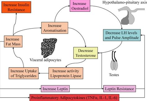 testosterone deficiency and obesity picture 7