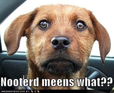 human male pet is get it neutered burdizzo picture 8
